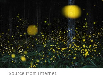 Love With no Boundaries: Watching fireflies